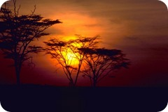 african-sunset_w725_h483